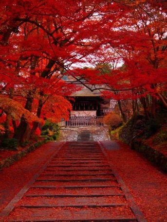 kyoto-fall